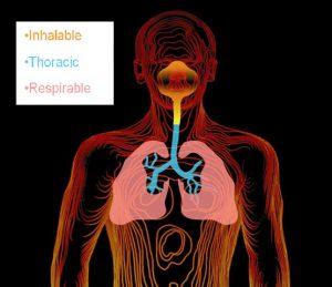 תיאור דרכי הנשימה והיכן חודרים חלקיקי אבק מזיק